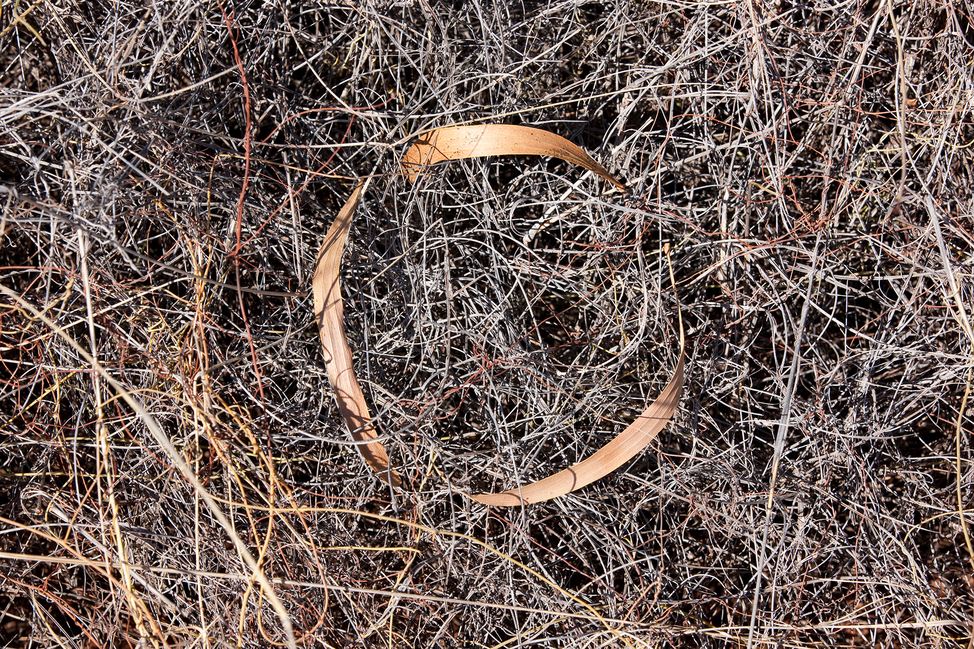 Leaf Circle, Winton, Queensland, Australia, 2013