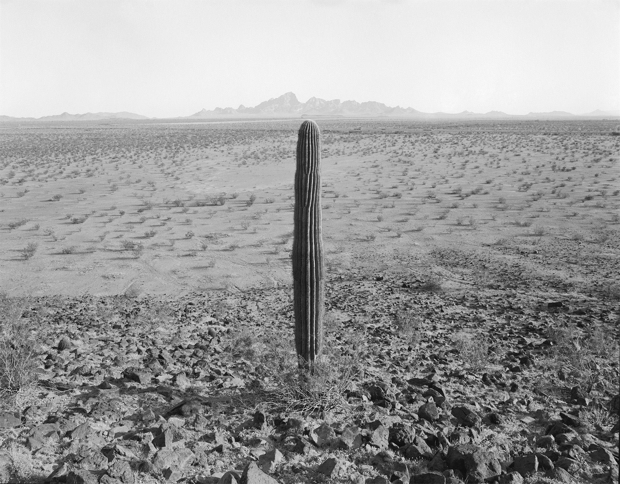 Cactus, Arizona, USA, 1977
