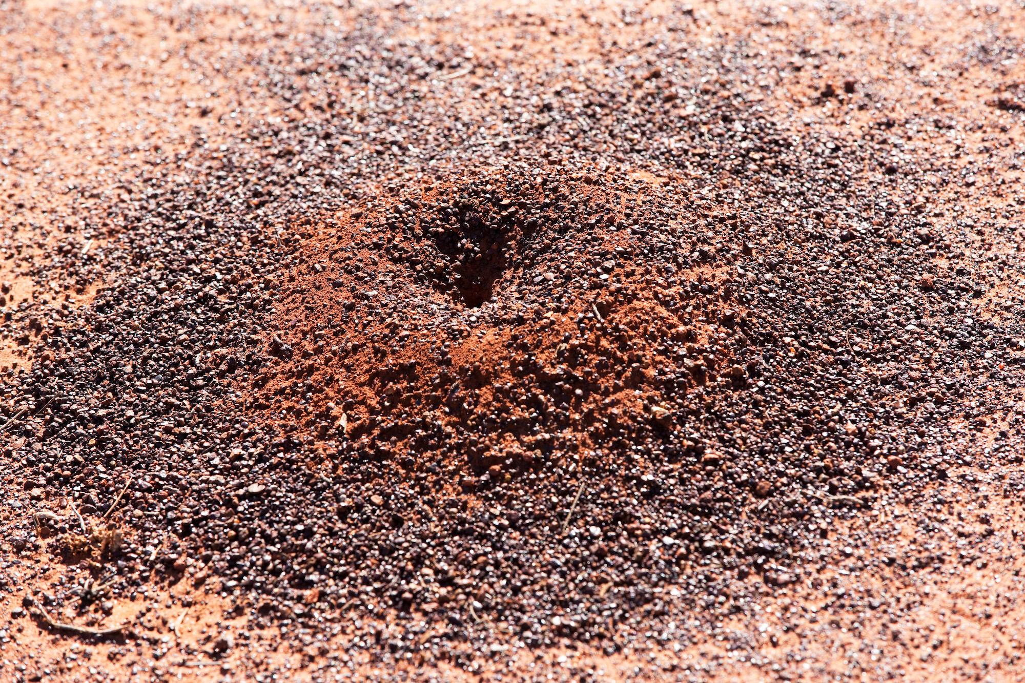 Ant Hill, Winton, Queensland, Australia, 2013